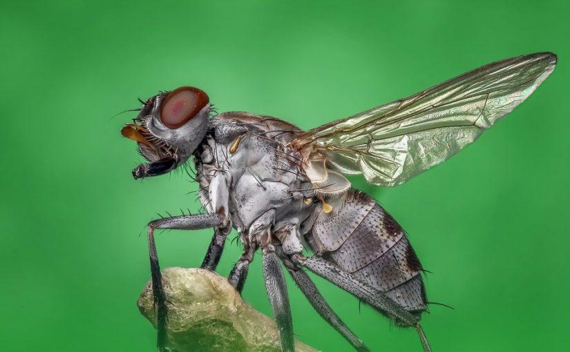 protéger sa maison des insectes en été